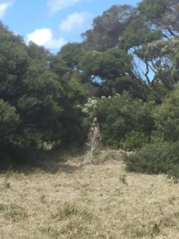 Hike snake2
