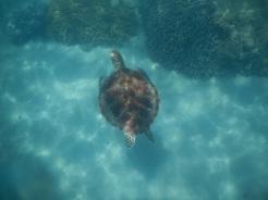 turtledidyouknow