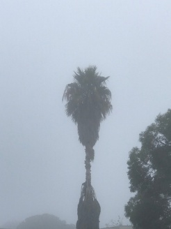 foggy3